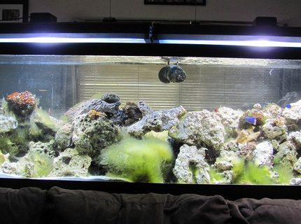 Rated #9: 125 Gallons Saltwater Fish Tank - 125 gal reef