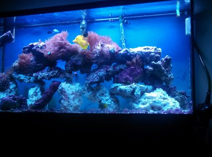 Rated #7: 60 Gallons Saltwater Fish Tank - Just the fish