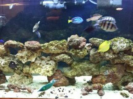 90 gallons saltwater fish tank (mostly fish, little/no live coral)