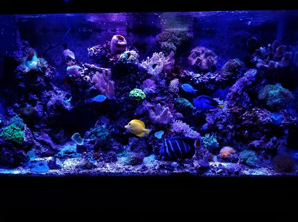 Rated #7: 90 Gallons Saltwater Fish Tank - Fishhhhhy