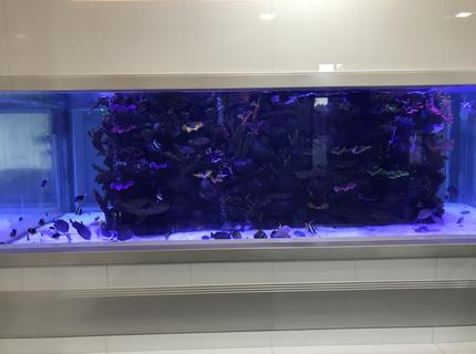 5000 gallon saltwater tank with artificial reef