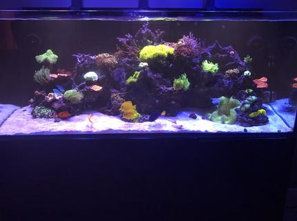 Rated #3: 165 Gallons Saltwater Fish Tank - More color