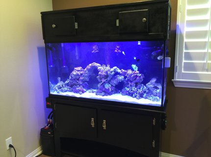 60 gallons saltwater fish tank (mostly fish, little/no live coral) - 60 gallon saltwater reef fish tank