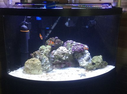 125 gallons saltwater fish tank (mostly fish, little/no live coral) - live sand, live rock, damsels occellaris clowns, sand sifting starfish, snails, peppermint shrimp, tidal 75 filter, sterilizer, and protien skimmer 54 corner tank