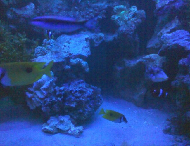 125 gallons saltwater fish tank (mostly fish, little/no live coral) - quiet time