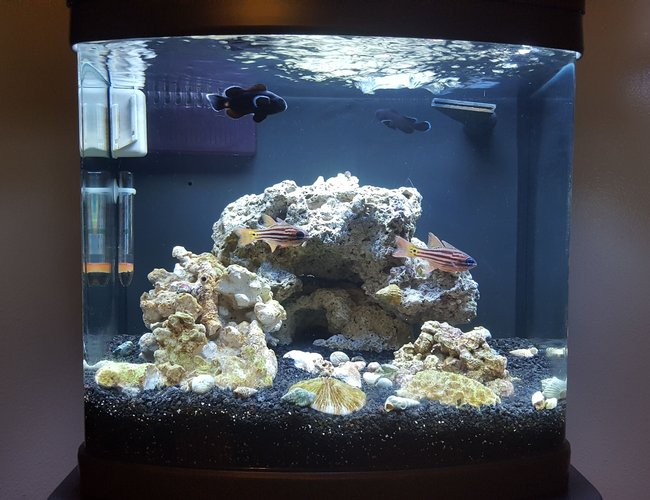 12 gallons saltwater fish tank (mostly fish, little/no live coral) - Midnight Black Clowns