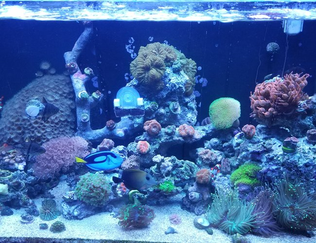 30 gallons saltwater fish tank (mostly fish, little/no live coral) - Started back up a year ago. Red sea 250 tank.