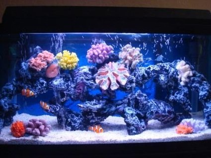 Rated #52: 30 Gallons Saltwater Fish Tank - not bad?
