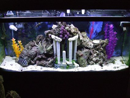 Rated #60: 55 Gallons Saltwater Fish Tank - NFO