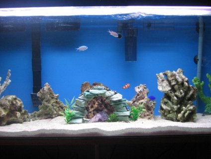 Rated #57: 60 Gallons Saltwater Fish Tank - 20 lbs of indonesian live rock, 5 lbs of premium fiji live rock, 2 fake corals and a regular painted rock. Fish: 3 yellow tail damsels, 2 clowns and 2 green something.