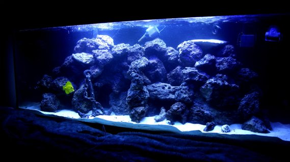 Rated #4: 100 Gallons Saltwater Fish Tank - 100 gallon reef tank. corals consist of mushrooms, buttons, leathers, hammer corals, and some other that i am not sure of but are in there.