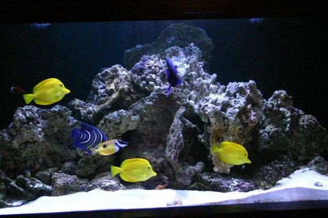 Rated #55: 190 Gallons Saltwater Fish Tank - 190