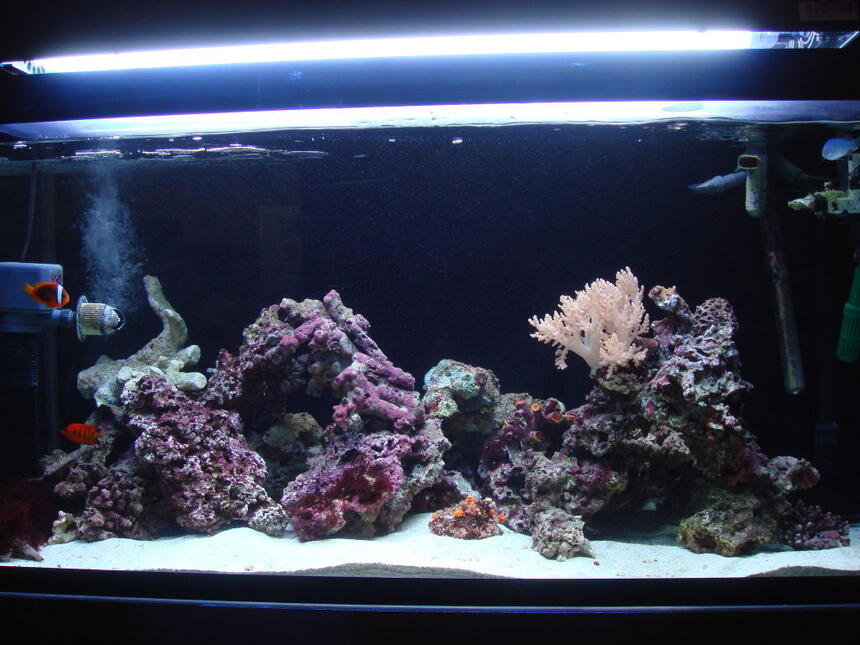 Rated #70: 85 Gallons Saltwater Fish Tank - 85 gallon bought it here in japan, SUMP sits on top of tank very unique.