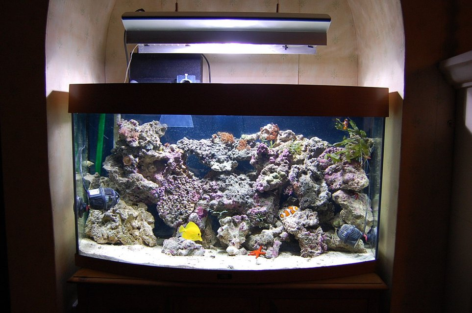 Rated #1: 40 Gallons Saltwater Fish Tank - Latest Picture of my Reef setup