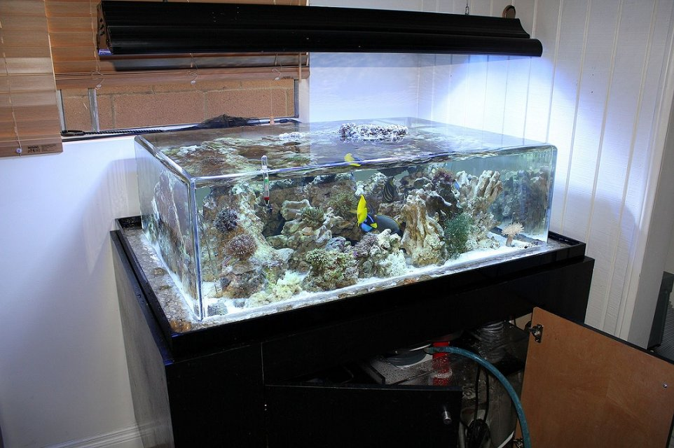 Rated #3: 150 Gallons Saltwater Fish Tank - my tank