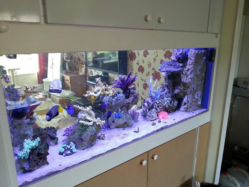Rated #1: 130 Gallons Saltwater Fish Tank - New in wall tank, unfinished cabinet