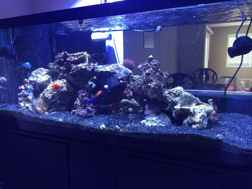 Rated #61: 75 Gallons Saltwater Fish Tank - 75 gal FOWLR tank