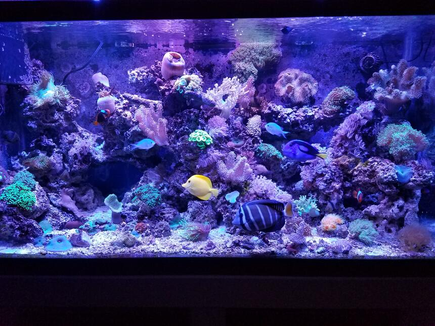 Rated #1: 90 Gallons Saltwater Fish Tank - Fishhhhhy
