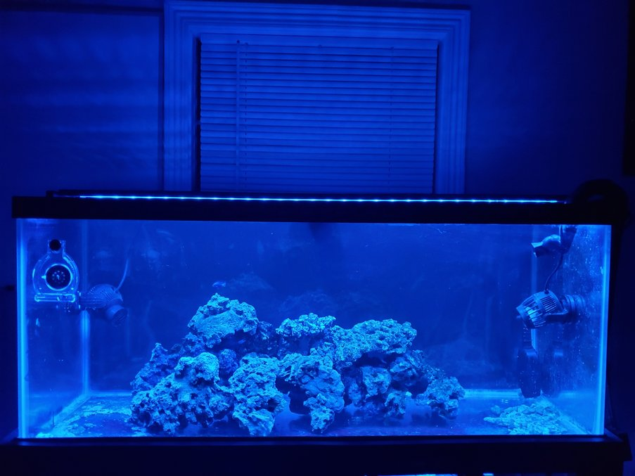 75 gallons saltwater fish tank (mostly fish, little/no live coral) - 75 Bottomless Predator