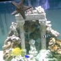 75 gallons saltwater fish tank (mostly fish, little/no live coral) - mid 75g