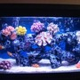 30 gallons saltwater fish tank (mostly fish, little/no live coral) - not bad?