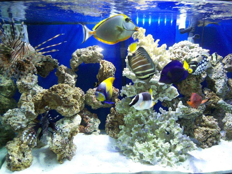 Most beautiful saltwater fish tanks all time for Above water fish tank