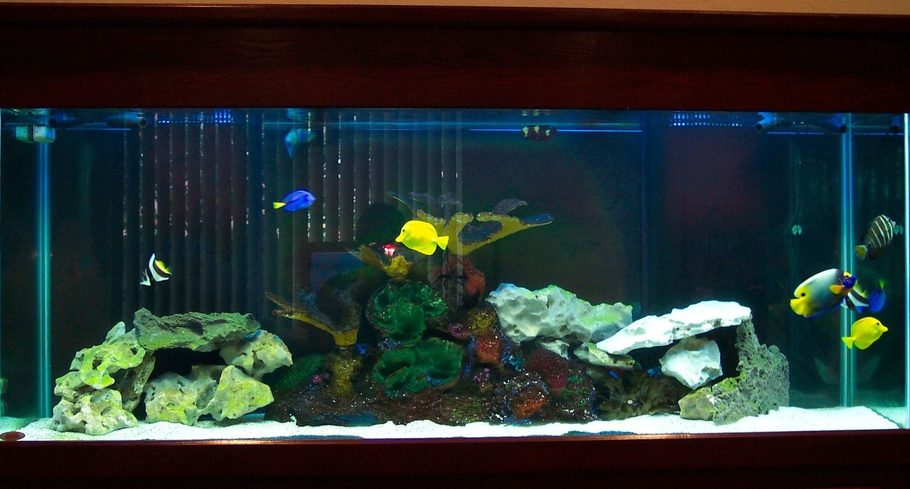 Ck in fla 39 s saltwater fish tanks photo id 15405 full for Aquarium poisson rouge pompe
