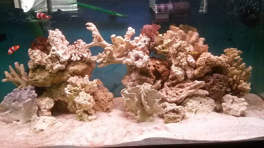 I got coral now 4 frags. Still 2 clowns and a damsel. 4 hermits a emerald green cran and a cleaner shrimp