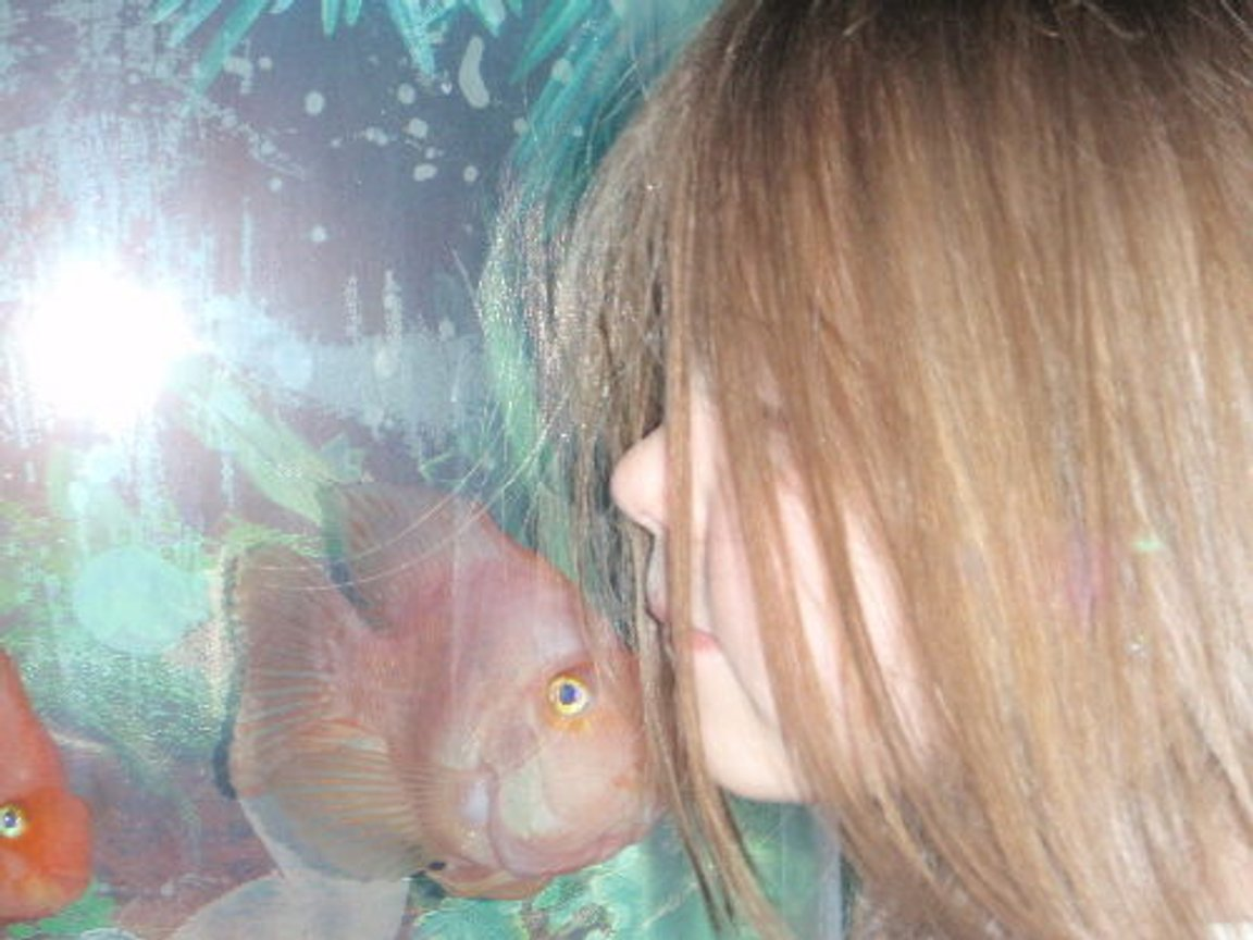 "freshwater fish stocking in 55 gallons tank - kissy kissy. this fish ""DORA""only comes up to my daughter...."