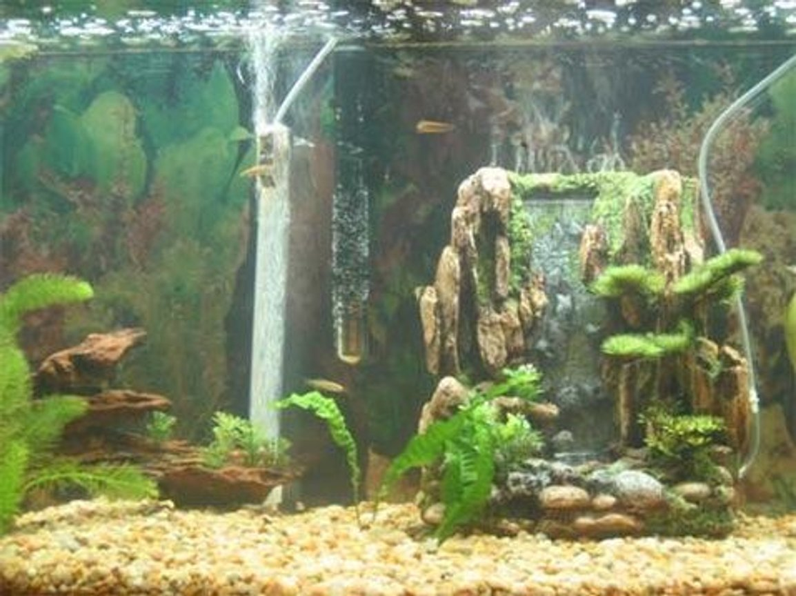 freshwater fish stocking in 30 gallons tank