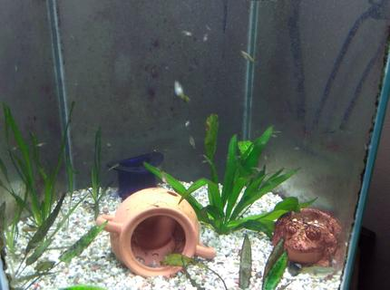 freshwater fish stocking in 75 gallons tank - Baby guppies