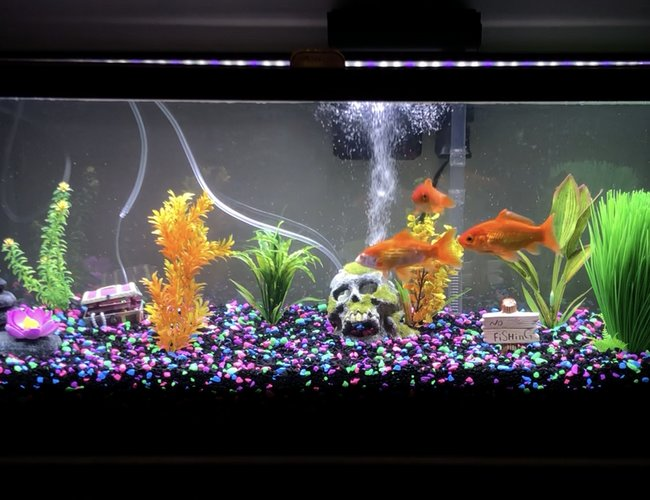 freshwater fish stocking in 40 gallons tank - Meet Finnegan, Scruffy and Chewy