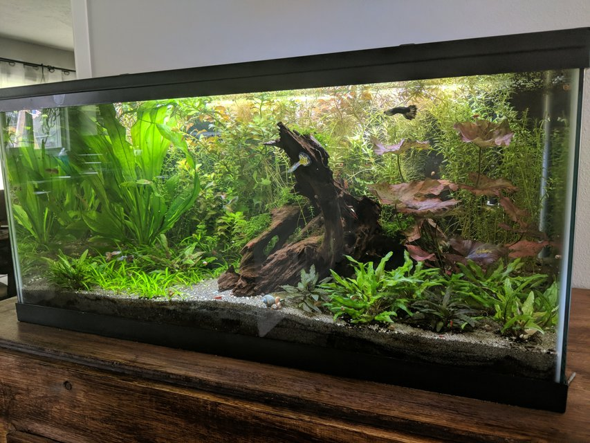 Rated #1: Freshwater Fish Stocking In 40 Gallons Tank - This is my 40 gallon freshwater planted tank.