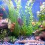 freshwater fish stocking in 30 gallons tank - pic