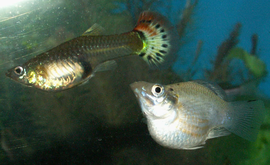 Dalephilby S Freshwater Fish Photo Id 15837 Full Version