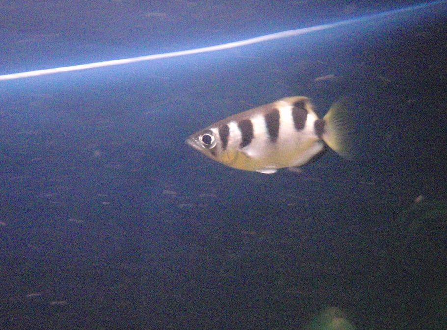 Archer Fish Tank | Stocking The Tank Ratemyfishtank Com