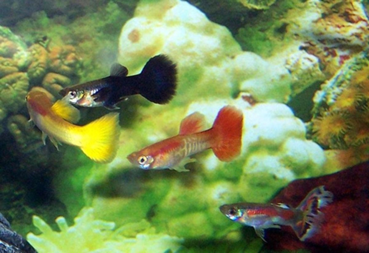 The Science Behind Behavior: Fish Jumping Out of Tanks