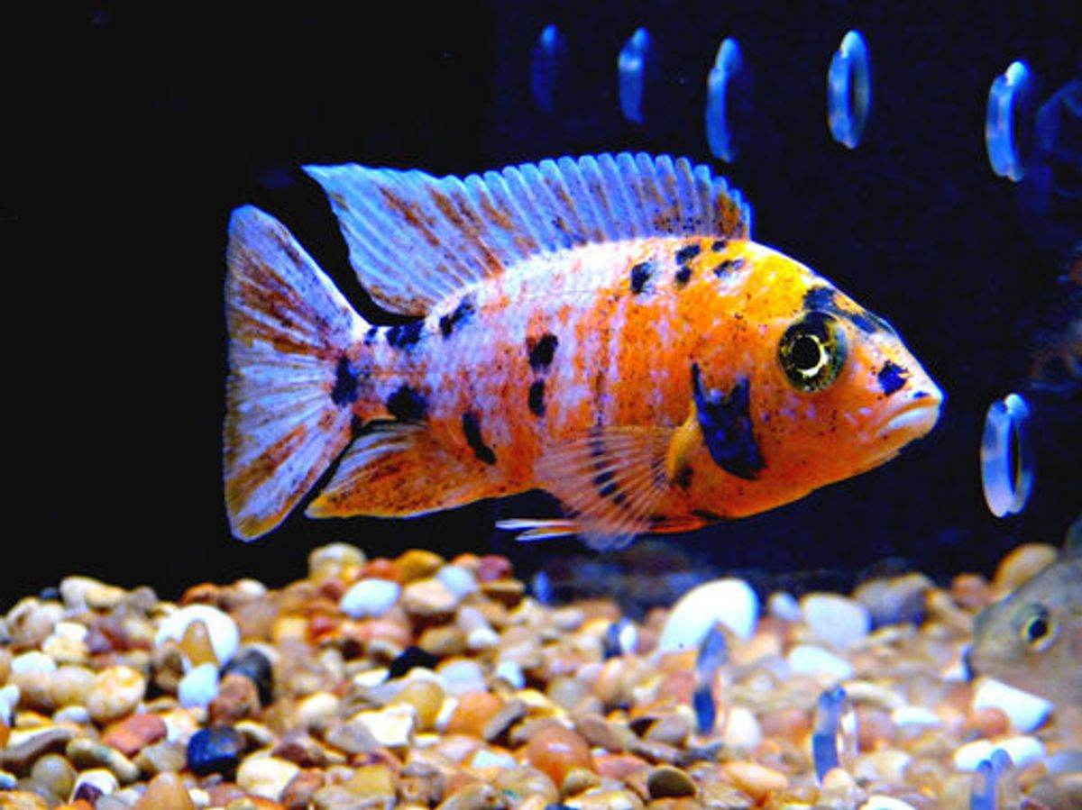 The Top 10 Worst Community Fish Ratemyfishtank Com