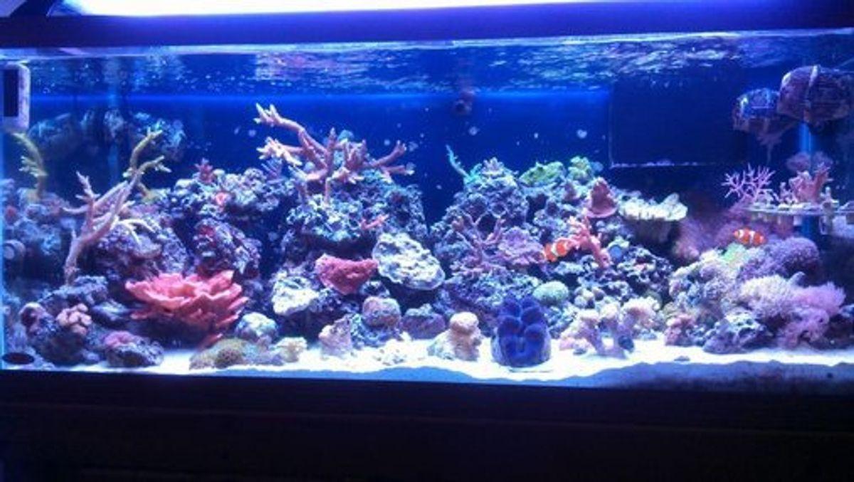 Common Saltwater Aquarium Fish Diseases Ratemyfishtank Com