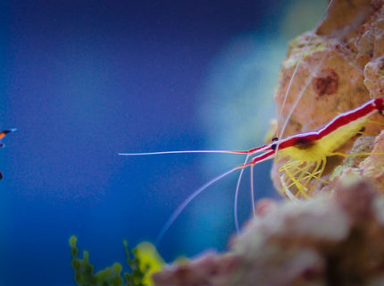 Rated #2: Saltwater Fish Stocking In 90 Gallons Tank - My clown and my Shrimp...