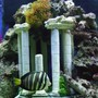 saltwater fish - pterois volitans - volitan lionfish stocking in 55 gallons tank - my sailfin tang swiming by rome
