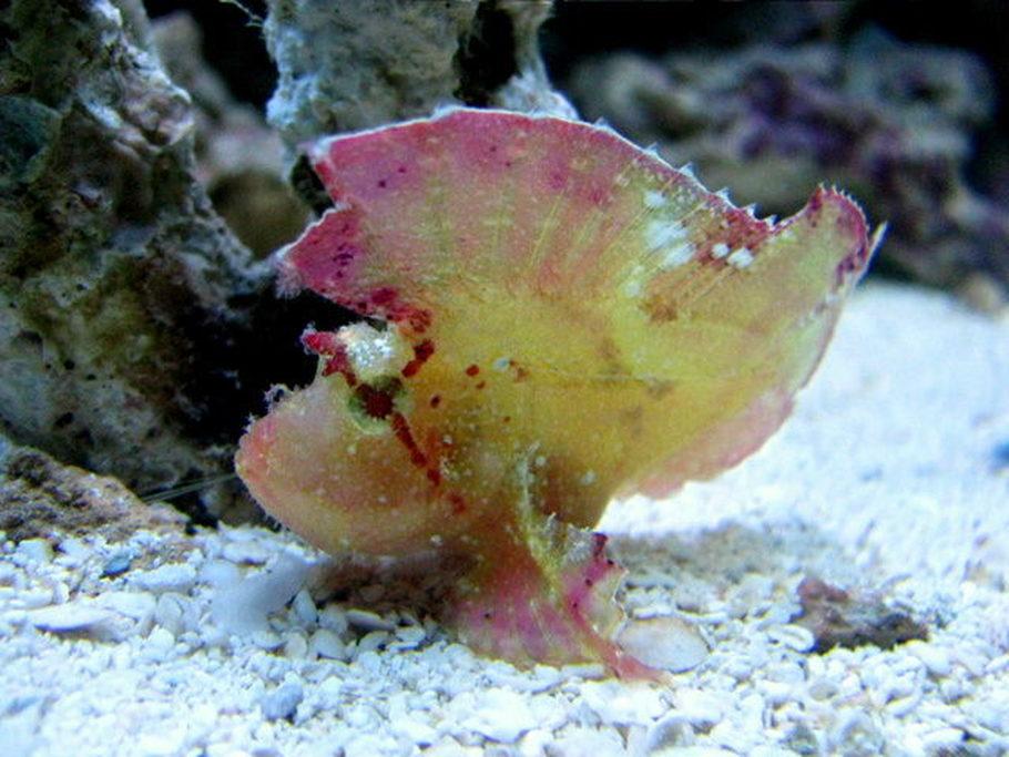 Most Beautiful Saltwater Fish All Time Ratemyfishtank Com