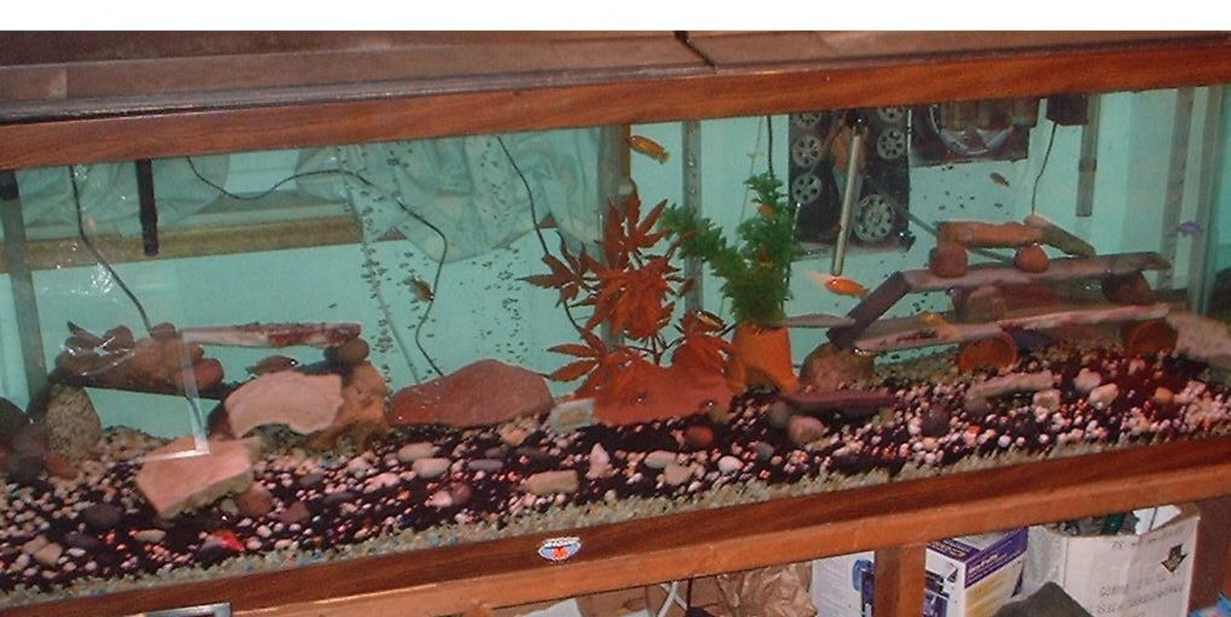 freshwater fish tank (mostly fish and non-living decorations) - 150 gallon Cichlid tank