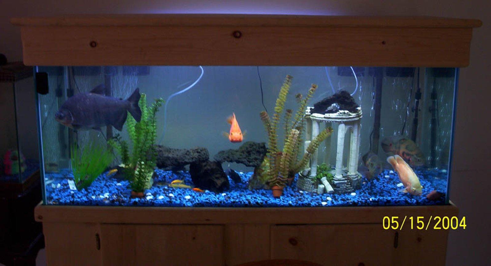 Photo #1 - 100 Gallon Fishtank 8:1 Blue To Black Rock Mixtu