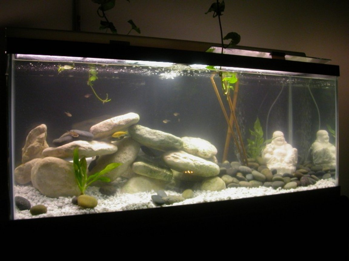 75 gallons freshwater fish tank (mostly fish and non-living decorations) - My New Baby