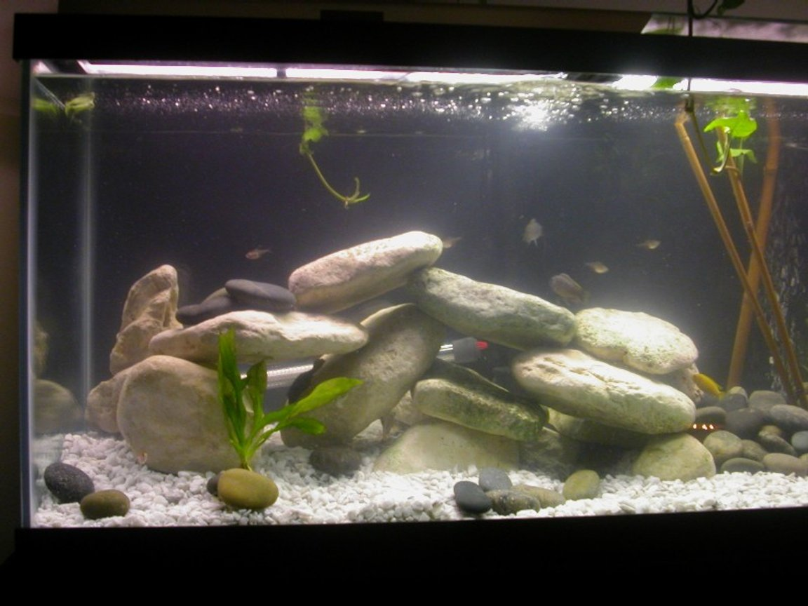 75 gallons freshwater fish tank (mostly fish and non-living decorations) - Cichlid Stack