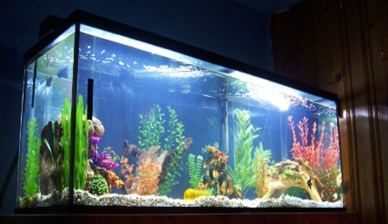 120 gallons freshwater fish tank (mostly fish and non-living decorations) - 120 gal of aqua therapy