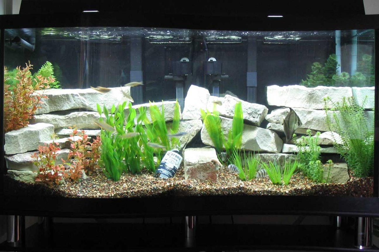 "90 gallons freshwater fish tank (mostly fish and non-living decorations) - 90-gal. ""S"" shaped fresh water aquarium and some fish !"