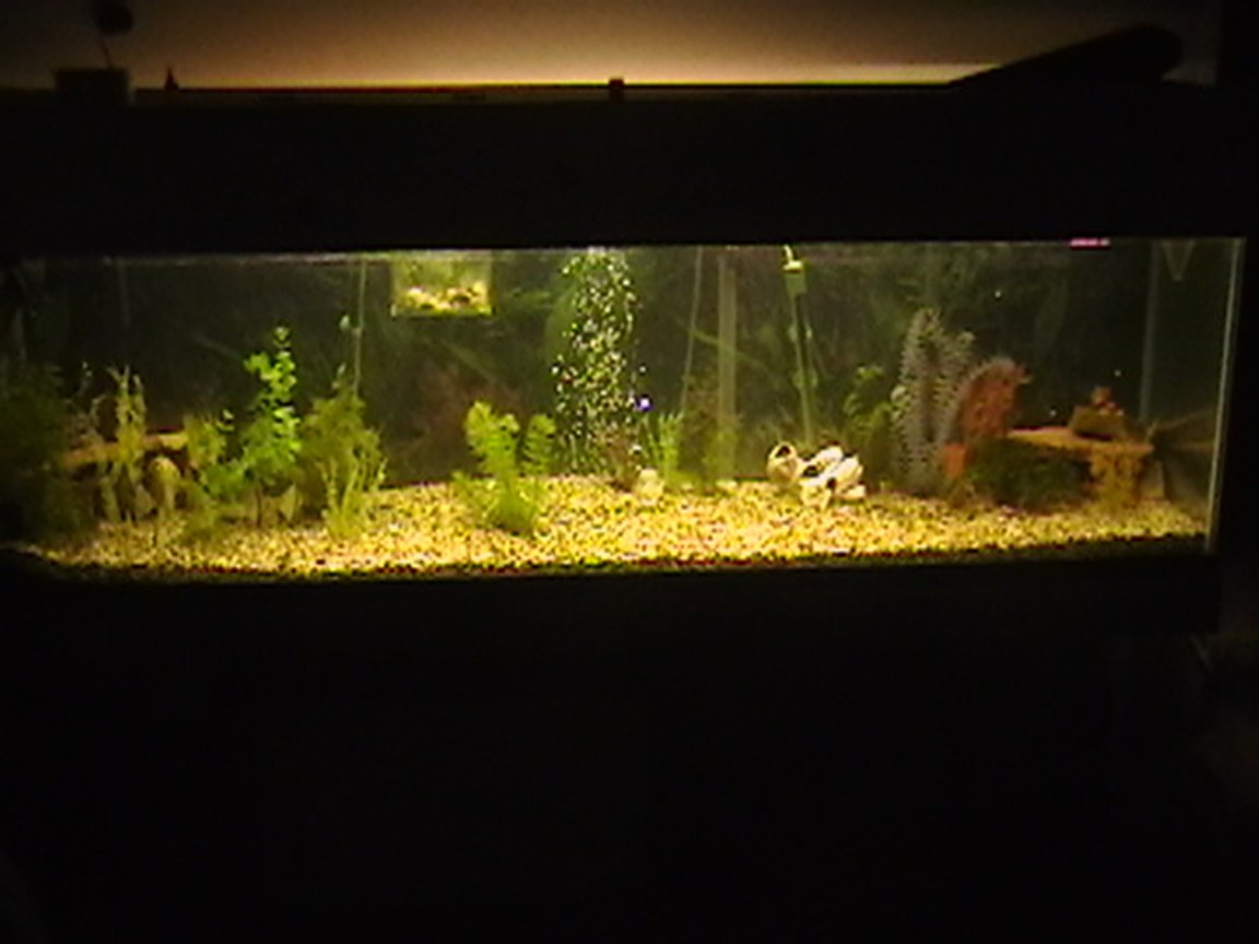 100 gallons freshwater fish tank (mostly fish and non-living decorations) - this is my tank