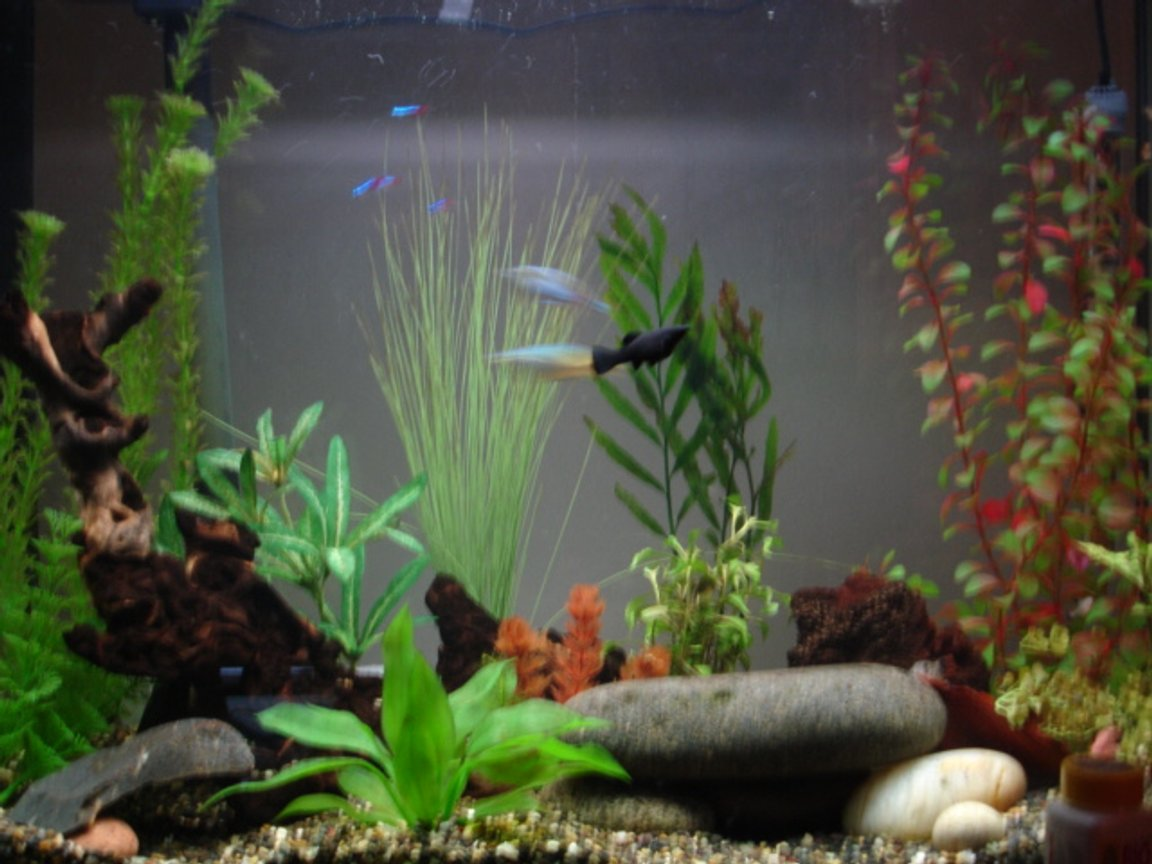 37 gallons freshwater fish tank (mostly fish and non-living decorations) - 37 gallon eclipse